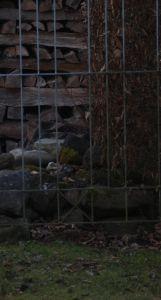 Flecktarn auf Stein